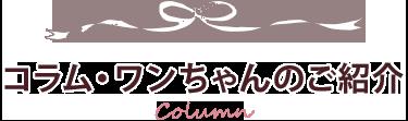 コラム・ワンちゃんのご紹介